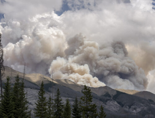 FVREB Board of Directors commits funds to support relief efforts for fires in BC as province declares state of emergency